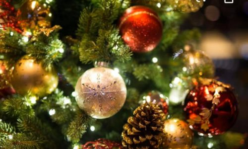 Festive Lunch & Dinner at The Wild Goose Chester