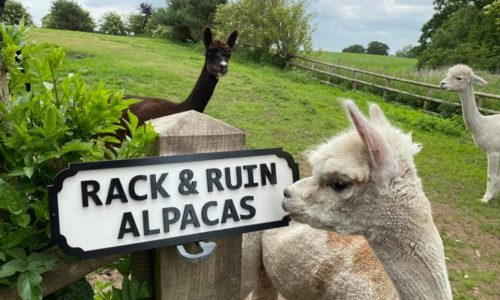 WLGT Box Office – Exclusive Summer Picnic and Alpaca Experience Chester